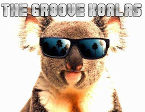 the groove koalas